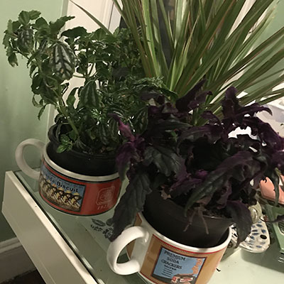 plant array in vintage ad soup cups